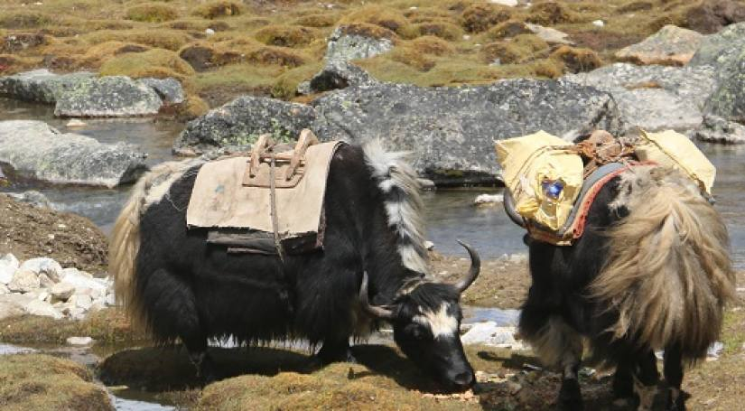 6 Best Things to Experience while Trekking in Nepal