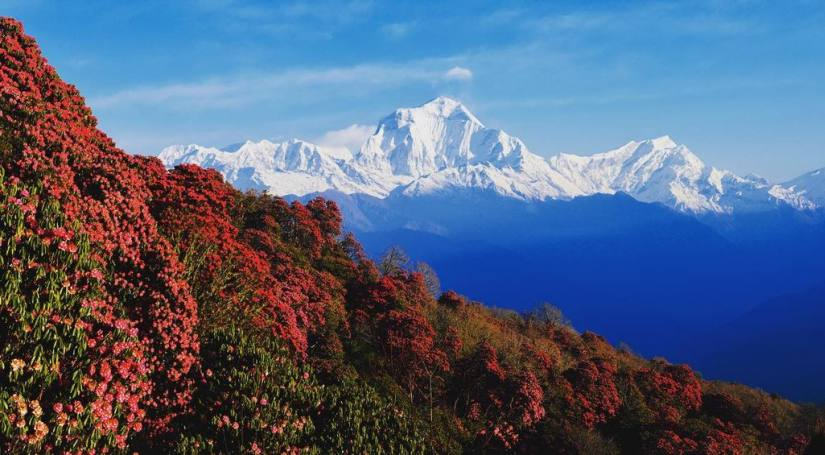 Spring Beauty in Nepal: Exploring the Beds of Colorful Flowers